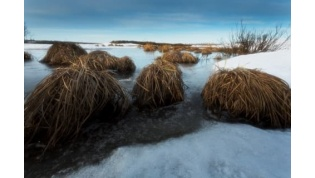 Двое мужчин утонули на болоте под Островцом