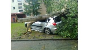 Стихия не проявила солидарность… В лидском дворе дерево упало на автомобиль